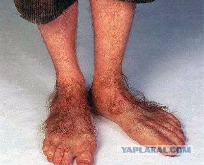 лохматые ноги фото
