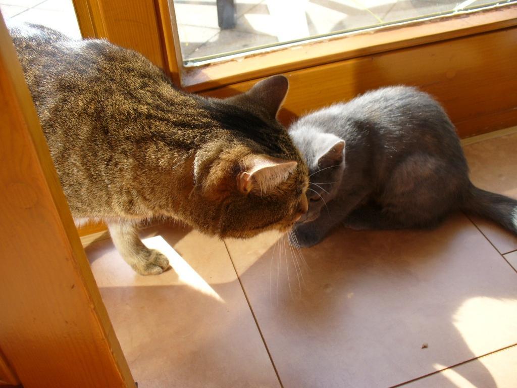 Наконец-то появился друг и у кота