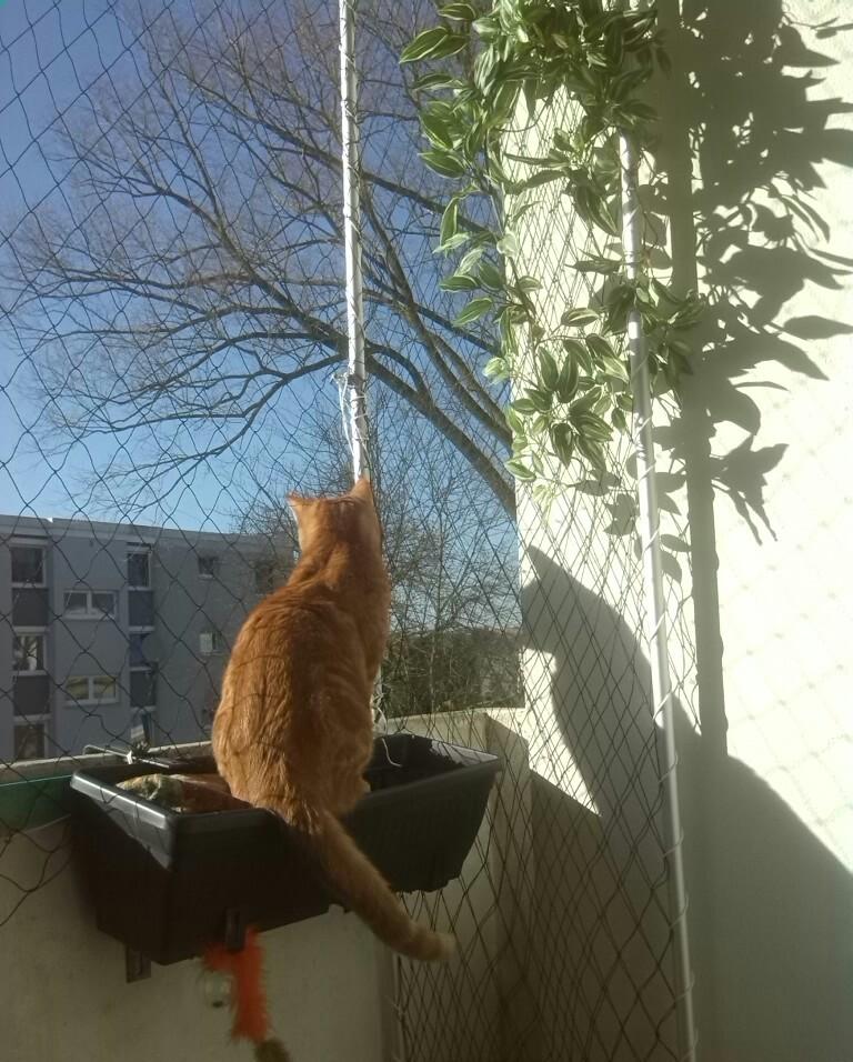Сетка для балкона для кота.