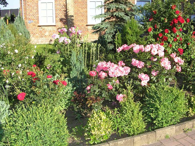 розы и лилия фото клумба
